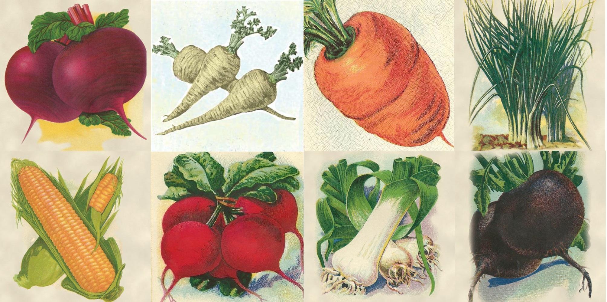 Семена моркови огурцов редиса