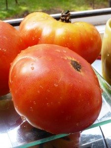 помидоры копиа