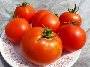 помидоры бонни бест