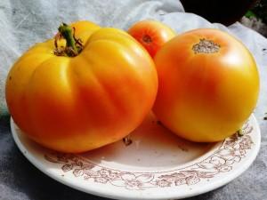 помидоры басинга