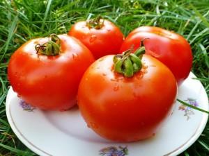 помидоры манимейкер