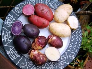 красный, фиолетовый, мраморный, белый картофель