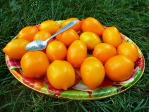 Помидоры Лимон-лиана или Чудо Света