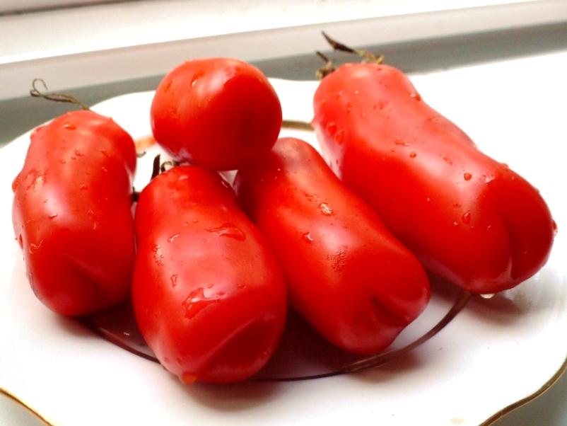 помидоры женская радость фото