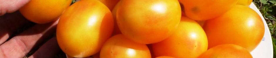 помидоры Алыча