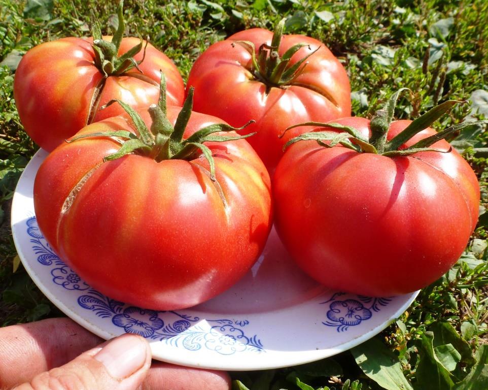 скачать бесплатно игру помидоры - фото 10